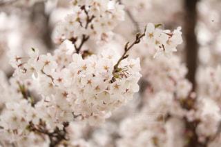 春 - No.463146