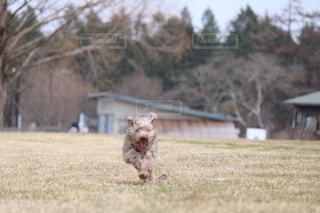 犬の写真・画像素材[463151]