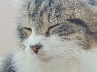 猫の写真・画像素材[463275]