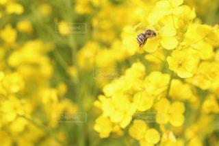 自然の写真・画像素材[513420]