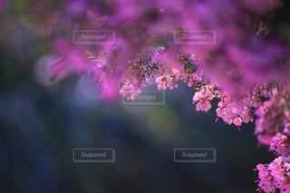 花の写真・画像素材[333670]