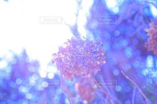 花の写真・画像素材[333680]
