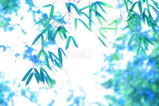 植物の写真・画像素材[333690]