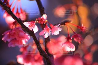 花の写真・画像素材[333691]