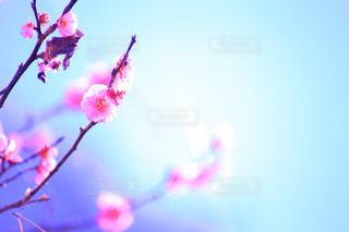 花の写真・画像素材[333695]