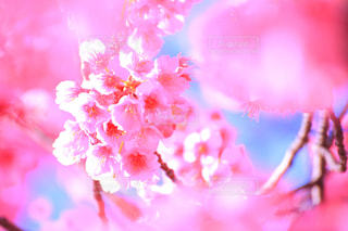 花の写真・画像素材[333705]