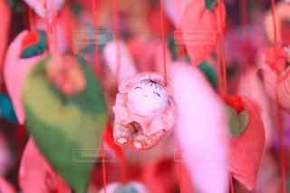 桜の写真・画像素材[333709]
