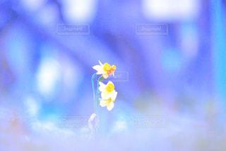 花の写真・画像素材[333807]