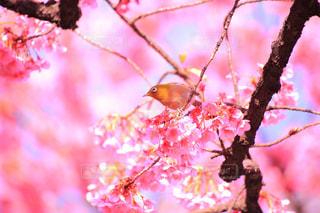 花の写真・画像素材[333808]