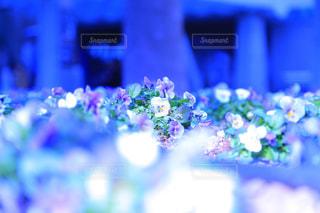花の写真・画像素材[333809]