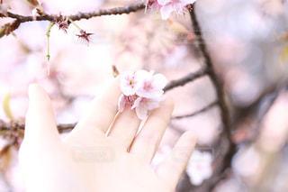 花の写真・画像素材[335366]