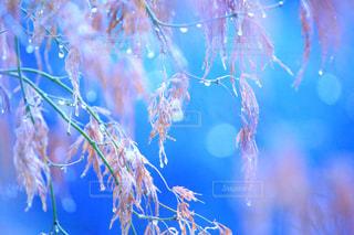 雨の写真・画像素材[336603]