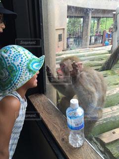 猿の写真・画像素材[346299]