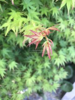 緑の写真・画像素材[469837]