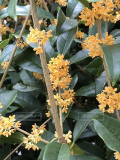 近くの花のアップの写真・画像素材[803739]