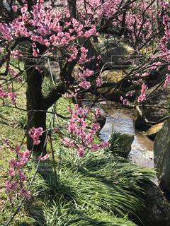ピンクの花の写真・画像素材[1065483]