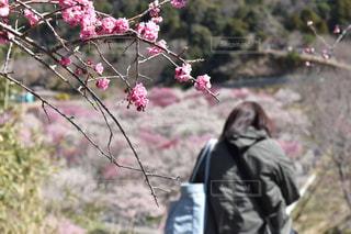 花を撮っている人の写真・画像素材[1087047]