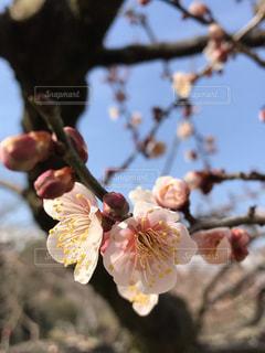春の足音が聞こえるの写真・画像素材[1801412]