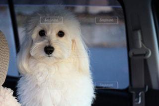 犬の写真・画像素材[334393]