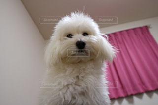 犬 - No.335640