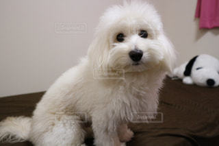 No.335646 犬