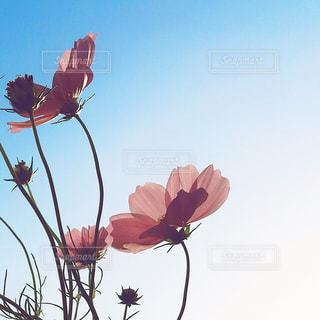 空の写真・画像素材[334539]