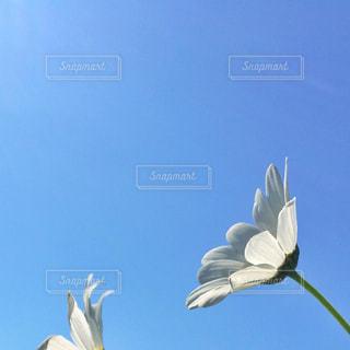 空の写真・画像素材[335674]