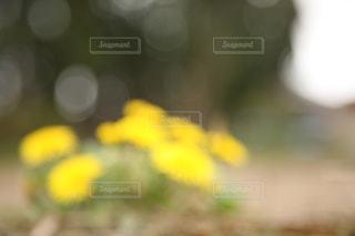 春の写真・画像素材[334912]