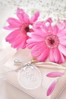 花の写真・画像素材[334605]