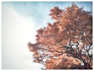 自然の写真・画像素材[334628]