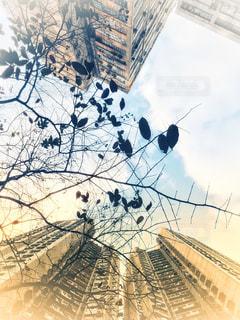 2018年1月の香港の朝の写真・画像素材[1041868]