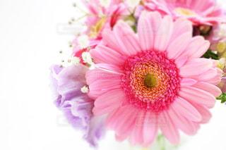植物にピンクの花の写真・画像素材[1052228]