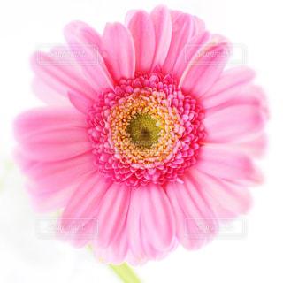 花を持っている手の写真・画像素材[1052229]