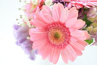 植物にピンクの花の写真・画像素材[1052230]