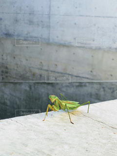 人工×自然の写真・画像素材[1570575]