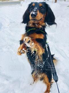 雪遊びの写真・画像素材[968640]