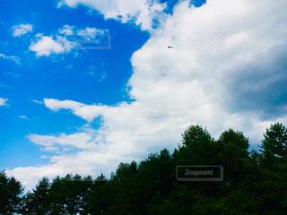 空飛ぶとんぼの写真・画像素材[1447753]