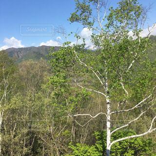 森林 - No.384117