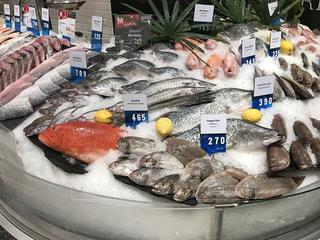 No.335269 魚