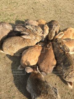 野生動物の写真・画像素材[336412]