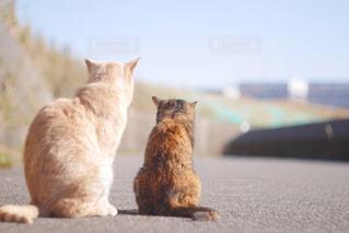 猫の写真・画像素材[337935]