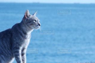 猫の写真・画像素材[338119]