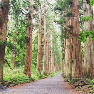 森林 - No.335991