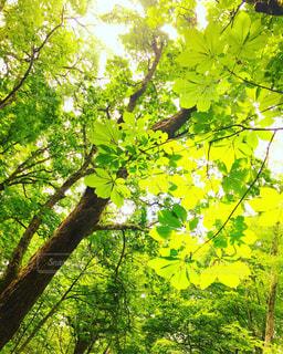 自然の写真・画像素材[335997]