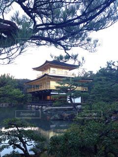 金閣寺の写真・画像素材[342056]