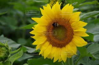 自然の写真・画像素材[336329]