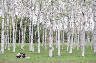 森の木の写真・画像素材[2098100]