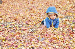 草の中に立っている小さな男の子の写真・画像素材[2699599]