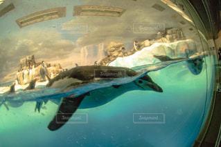 水族館の写真・画像素材[336403]