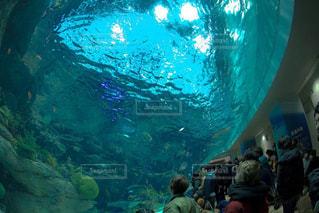 水族館の写真・画像素材[336405]